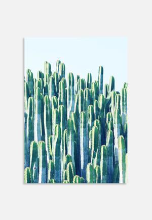 83 Oranges Cactus V2 Art