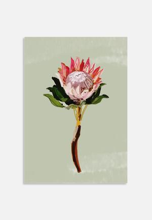 Sarah Allderman Protea 1 Art